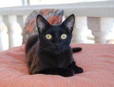 NAMI - Gato adoptado - AsoKa el Grande