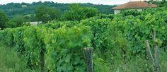 Coteaux des vignes Landes Chalosse Coteau de Chalosse Tursan tourisme luys