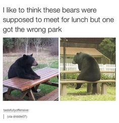 Check out these Funny Animals Memes which are funny and cute at the same time. These animal memes are trending all over the internet. Funny Animal Memes, Funny Animal Pictures, Cute Funny Animals, Funny Cute, Best Funny Pictures, Funny Jokes, Funny Pics, Animal Humor, Most Famous Memes