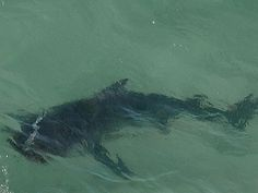 Beaches closed: Has monster shark returned to haunt Newcastle's swimmers?