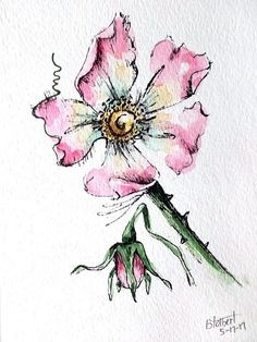 "Original artwork of a pink rose rendered in pen, ink and watercolor. It is titled ""Pink Rose With Bud"" and is signed and dated at the bottom with the title on the back. The wild rose is done in warm pink colors with a tint of burnt umber and a viridian hu Watercolor Art Paintings, Pen And Watercolor, Watercolor Flowers, Painting & Drawing, Art Floral, Plant Drawing, Ink Drawings, Rose Art, Art Sketchbook"
