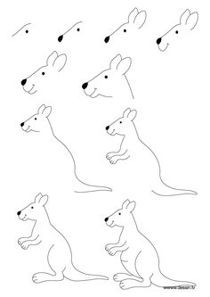 Le kangourou le kangourou kangourou et australie - Dessiner un kangourou ...