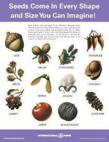 Free downloadable posters for identifying trees.These would be nice for a kids room if they are into nature. Educational as well as kind of neat. Internati