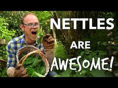 Nettles are Awesome! 🌱🌱🌱 - YouTube Veg Garden, Garden Soil, Save Our Earth, Garden Planner, Diy Garden Decor, Garden Ideas, Grow Your Own Food, Gardening Tips