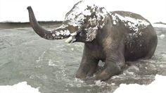 Der Zoo von Oregon hat seine Tiere gefilmt, wie sie niedlich im ersten Schnee des Jahres spielen und so schlecht kann so ein Tag ja gar nicht sein, wenn man einen niedlichen Otter hat im Schnee tollen sehen. Eisbären, Robben und Elefanten sind natürlich auch niedlich. Alle Tiere sind niedlich ausser Pandas. Ich hasse [ ]