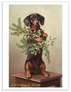 Dachshund With Mistletoe Vintage Postcard Image Greeting Card CH039