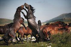 Merveilleuse, fascinante nature... Ces surprenantes images vous montre le monde animal comme vous ne l'avez jamais vu. Chacune de ces images nous rappelle que nous partageons cette planète avec une multitude ...