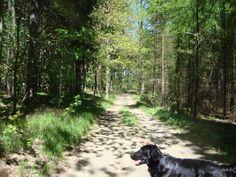 Midden in het bos !
