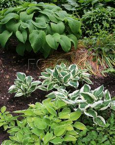 Hub, Math Word Problems, Maths, Worksheets, Gardens, Plants, Outdoor Gardens, Literacy Centers, Plant