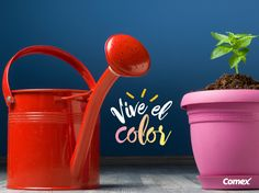 Llena de color y vida tu jardín decorando con llamativos elementos.  #ViveElColor #Ideas #Comex #Decoracion #Jardin #Colores #Lifestyle #Deco #Home #Interior