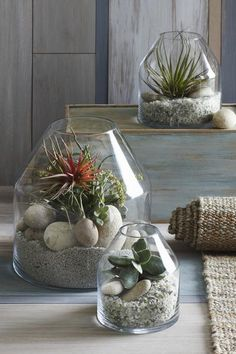 These contemporary, angled terrariums are crafted from thick glass for a solid, modern look. Equally striking with sparse succulents or thickly planted with ferns. Terrariums are empty, ready for your