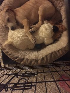 My sister got her new puppy a stuffed dog that has a heartbeat. He started playing with it and suddenly heard the heartbeat stopped and snuggled up to it and fell asleep. - see http://www.classybro.com/ for more!