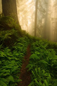 Light Shower - Del Norte Coast Redwoods State Park, California