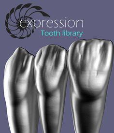 Dental Photos, Dental Anatomy, Beautiful Teeth, Restorative Dentistry, Dental Technician, Dental Veneers, Dental Laboratory, Dental Art, Dental Humor