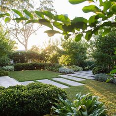 A garden I particularly like especially in the early morning with filtered sun light. Green Landscape, Landscape Design, Back Gardens, Outdoor Gardens, Small Garden Inspiration, Daily Inspiration, Urban Garden Design, Apple Garden, Sydney Gardens