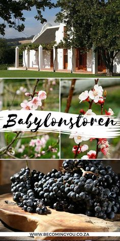 Located between the towns of Franschhoek and Paarl on a winefarm in the Cape Winelands, the Babylonstoren garden is fast becoming known as one of the great gardens of the modern world. Places Of Interest, South Africa, Traveling By Yourself, Cape Dutch, Secret Gardens, Seasons, Freaking Awesome, Travel Inspiration, Modern