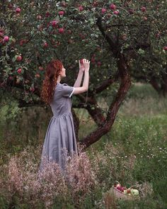 Woman Picking Apples (no 'google image search' info)