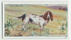 Dog Artwork, New York Public Library, Basset Hound, Moose Art, Digital, Postcards, Dogs, Journals, Animals