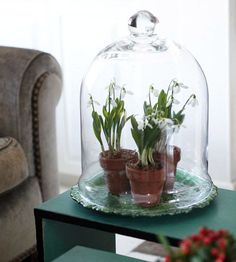 Easy Tabletop Touch Bring the garden inside -- create a mini tabletop terrarium beneath a pretty cloche. Here, a small glass cloche is also a practical way to protect potted plants from being knocked over. Cloche Decor, The Bell Jar, Bell Jars, Better Homes And Gardens, Glass Domes, Indoor Plants, Potted Plants, Indoor Gardening, Indoor Greenhouse