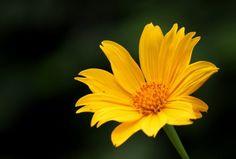 hoa da quy dalat (18)