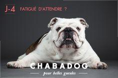 J-4 avant le lancement de Chabadog, le 28 Février 2015, en compagnie de l'impressionnant Gallak Chocolak.  https://fr.chabadog.com/