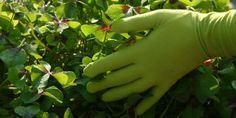 Foxgloves handschoenen