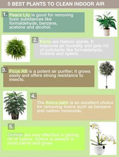 5 Best Houseplants for Air Purification#greenhomes#cleanair#plants
