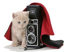 Png képek Neked: Cuki állatok