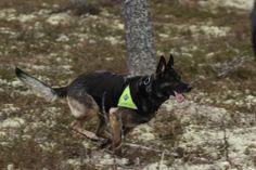 Leteaksjon i Asker. On the job in Asker, Norway