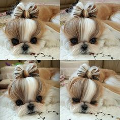 😍In luv with this puupy😍