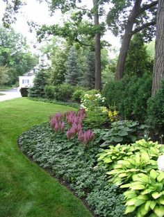 low maintenance plants - The background is Spruce and Arborvitae. The middle layer is Viburnum, Hydrangea and Ligularia. The foreground is Astilbe, Hosta and Pachy sandra..