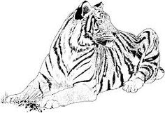 Free Printable Big Cat Coloring Pages Simply Pick The Image You Like And Print