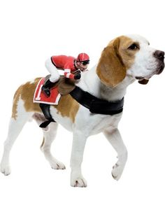 Ride On Jockey Dog Costume - maybe.... !!!
