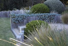 Garden Design Ideas & Inspiration : Landscape by Fiona Brockhoff Design. Fiona's designs are a great example of the contemporary Australian style. Pinned to Garden Design by Darin Bradbury… Coastal Gardens, Beach Gardens, Outdoor Gardens, Coastal Landscaping, Garden Landscaping, Landscape Design, Garden Design, Australian Native Garden, Cap Ferret