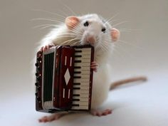 Some day I hope to play the accordion like this little guy :)