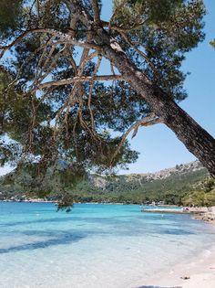 Türkisfarbenes Meer, feiner Sandstrand und schattige Bäume – die Playa de Formentor auf Mallorca versprüht tropisches Flair.