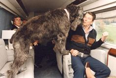 Ronald Reagan's dog Lucky looks past Reagan out the window of the helicopter. 1985. (Ronald Reagan Library)