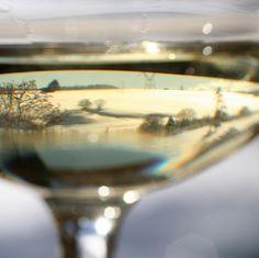 Vino bianco fa buon sangue Uno studio dell'Università degli Studi di Milano ha dimostrato che il vino bianco, grazie all'acido caffeico, svolge la funzione di protettore del sistema cardiovascolare
