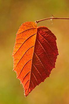 Backlit Leaves   Philip Schwarz Photography Blog