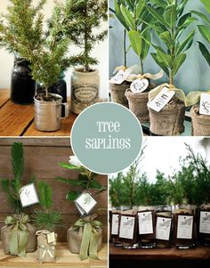 Give back to the environment with your wedding favours so people can grow their own.  Herbs, flowers, succulents, and saplings.