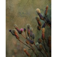 Dreamy photo thistle Shabby meadow fine art photography print, digital... (340 ZAR) ❤ liked on Polyvore featuring home, home decor, wall art, photography wall art, landscape painting, photo wall art, brown wall art and photo painting