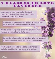 5 (more!) Reasons to Love Lavender!