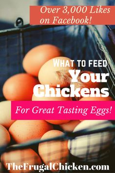 Want GREAT tasting eggs? Here's what to feed your chickens! Over 3,000 Likes on Facebook and 1,000 Pinterest shares! From FrugalChicken