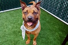 UPDATE:   Queso Suizo is safe.  DSC05834 QUESO SUIZO to be destroyed 5/8/17