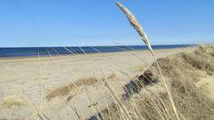 Mellbystrand. Hav strand sand sanddyna vass. Foto: Cecilia Rosén/Sveriges Radio