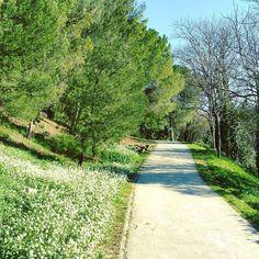 Les allées fleuries (on est bien en février... mais à Marseille) du parc de Font Obscure