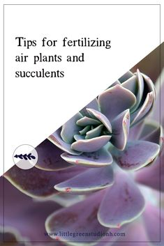 Tips for fertilizing your succulents and air plants