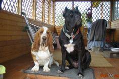 Diferentes raças de cães foto
