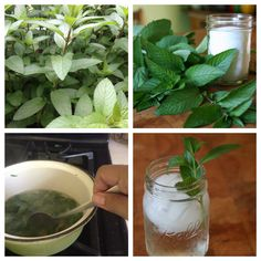 Beat the Summer Heat with this yummy Cool Mint Soda Recipe