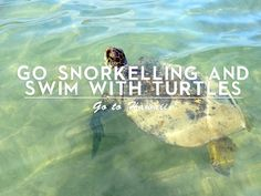 2 Go snorkeling in hawaii | places where i want to go back | honolulu | usa | holiday | travelling